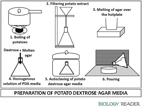 preparation of potato dextrose agar media