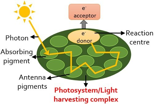 Photosystem or pigment system