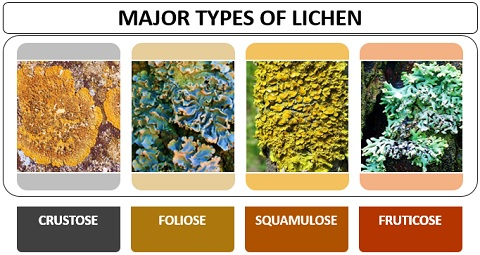 Types of Lichen
