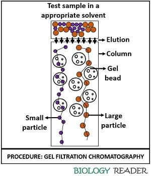 procedure of gel filtration chromatography