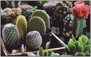 varieties of cactus