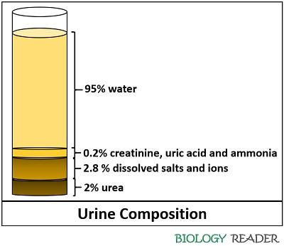 urine composition