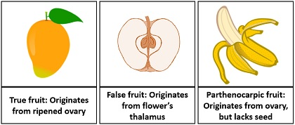 Fruit differentiation based on pericarp