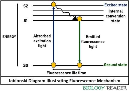 Jablonski diagram illustrating fluorescence mechanism