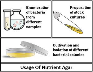 Uses of Nutrient agar