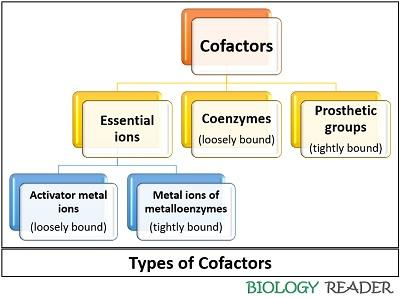 types of cofactors