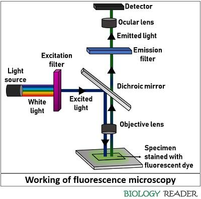 working of fluorescence microscopy