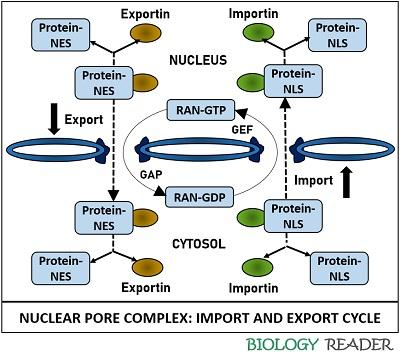 Import and export cycle through NPC