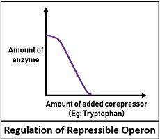 Regulation of repressible operon