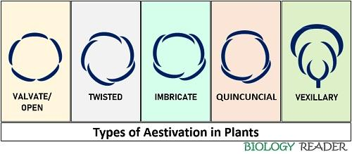 types of aestivation