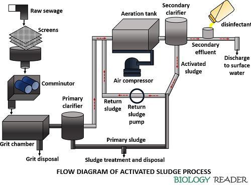 Flow diagram of activated sludge process