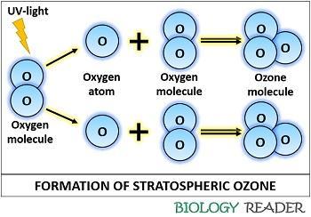 Formation of stratospheric ozone