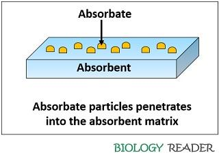 Role of absorbent