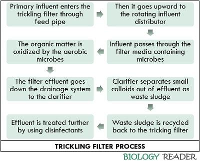 Working of trickling filter