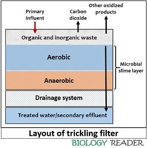 layout of trickling filter
