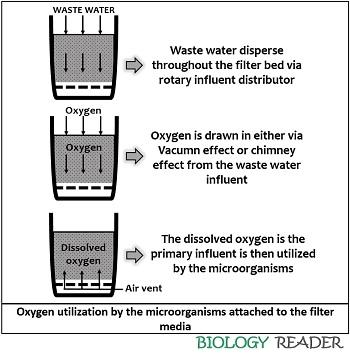 oxygen utilization by the microorganisms in the trickling filter