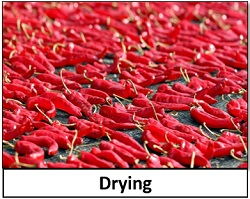 Drying food preservation