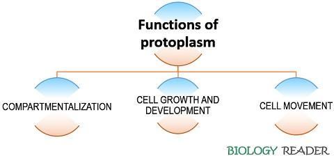 Functions of protoplasm