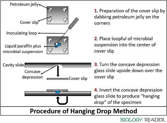 Procedure of hanging drop method