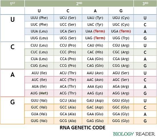 RNA genetic code