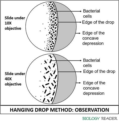 observation of bacterial motility in hanging drop method