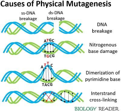 causes of physical mutagenesis