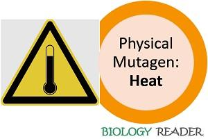 heat as physical mutagen