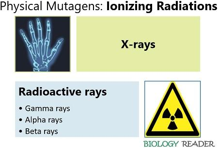 physical mutagens (ionizing radiations)