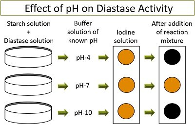 Effect of pH on diastase activity