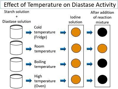effect of temperature on diastase activity
