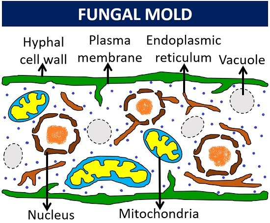 Fungal mold structure