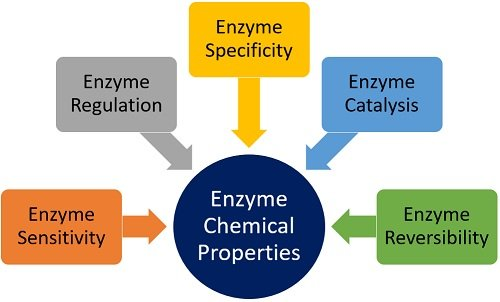 enzyme chemical properties