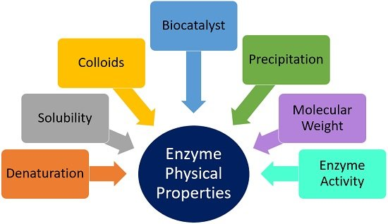 enzyme physical properties