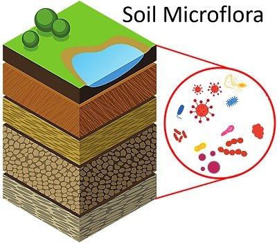 soil microflora