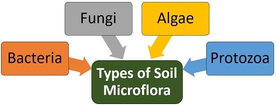 types of soil microflora