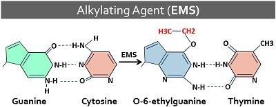 alkylating agent mutation