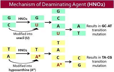 mechanism of deaminating agent