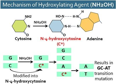 mechanism of hydroxylating agent