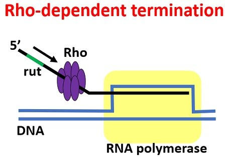 rho dependent termination