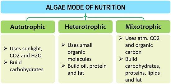 Algae mode of nutrition
