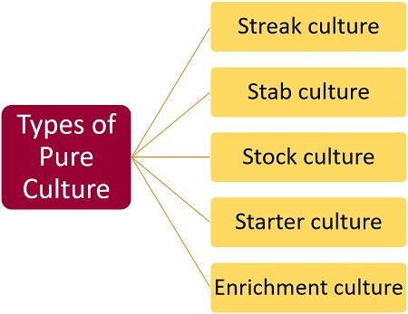 Types of pure culture