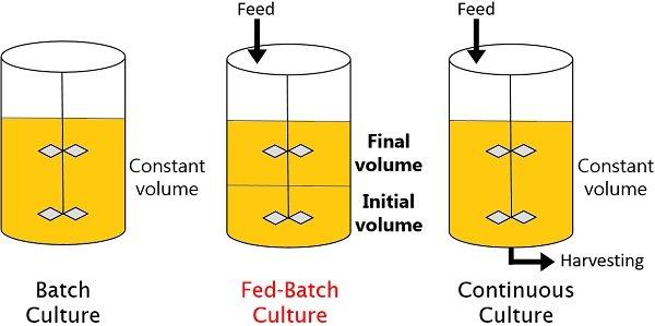 diagram of fed-batch culture