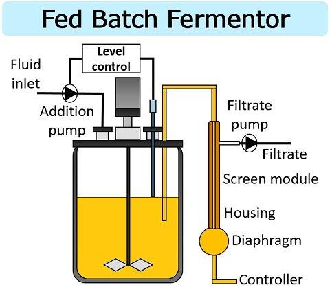 fed-batch fermentor