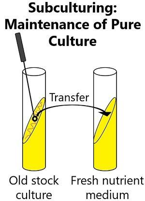maintenance of pure culture