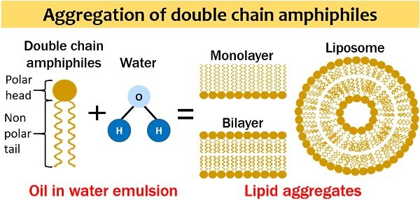 Aggregation of double chain amphiphiles