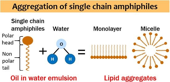 aggregation of single chain amphiphiles
