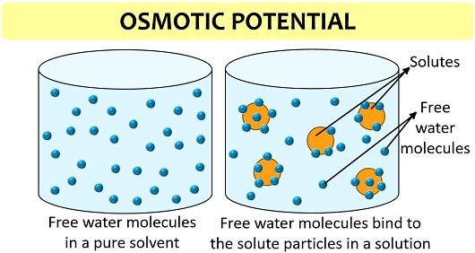 osmotic potential