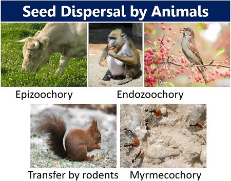 seed dispersal by animals
